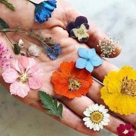 Как засушить цветы?